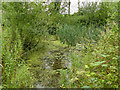 SJ8255 : Pond in Mill Lane Plantation by Stephen Craven