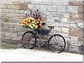 NY5455 : Bicycle as planter by Oliver Dixon