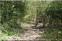 TQ5938 : Tunbridge Wells Circular Walk by N Chadwick