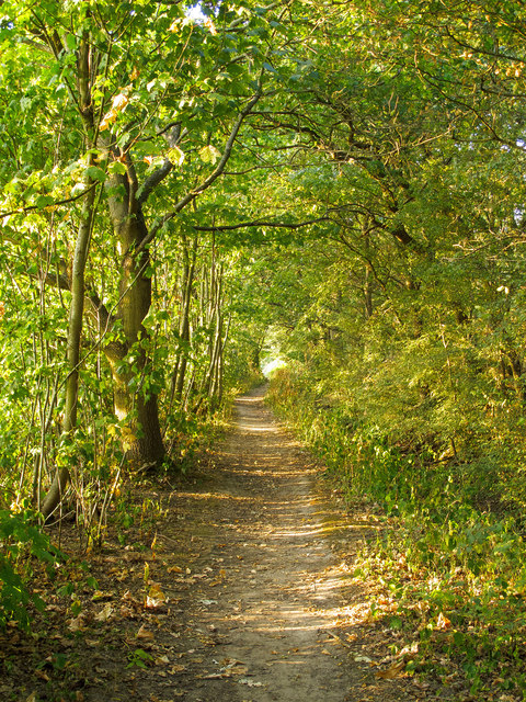 Path in Belhus Woods Country Park