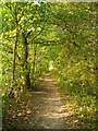 TQ5682 : Path in Belhus Woods Country Park by Roger Jones