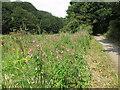 NZ3376 : Great Willowherb, Holywell Dene by Geoff Holland