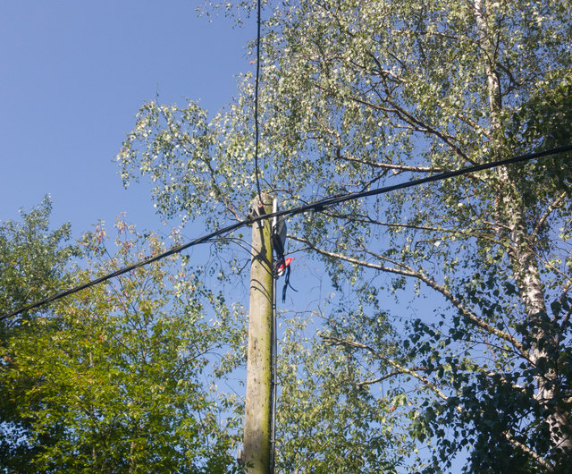Electricity lines at Waterview Farm after fire