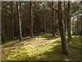 NH9057 : Culbin Forest by valenta
