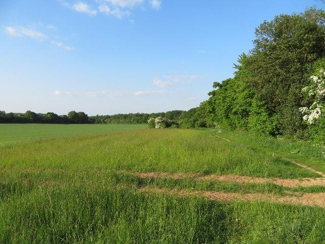 Wildflower corner - Lower Field (29.5 acres) by Sandy B