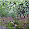 TQ4894 : A rainy day in Hainault Forest by Roger Jones