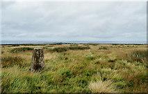 NZ7714 : Trig point on Newton Mulgrave Moor by Trevor Littlewood