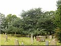 SK7452 : Jubilee cedar in the churchyard, Rolleston by Alan Murray-Rust
