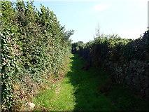 J3633 : Tall hedges bordering Smiley's Loanen by Eric Jones