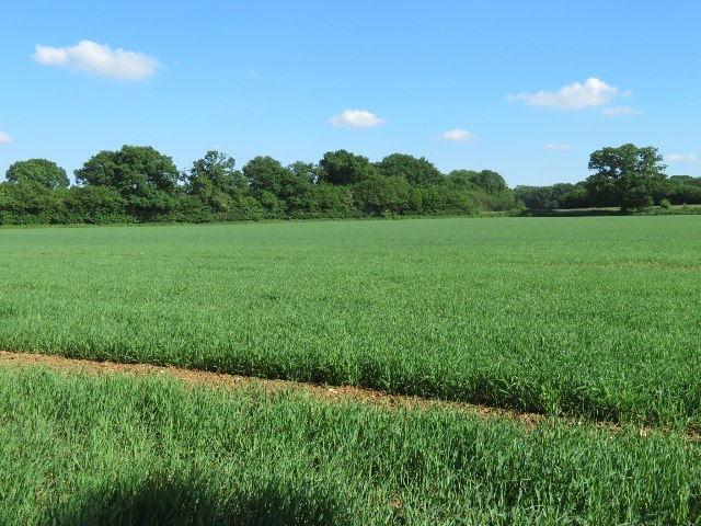 Hansfords Field (12 acres) by Sandy B