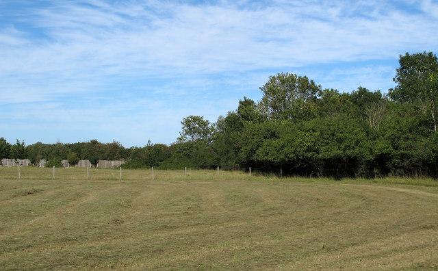 Recently mown grass field, nr Murthering Lane, Navestock