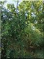 TF0820 : Plenty of Sloes by Bob Harvey