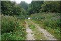 SE8556 : Chalkland Way towards Greenwick Dale by Ian S