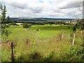 NZ1654 : Grazing pastures at Mounsett by Robert Graham
