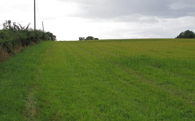 Field near Coxtie Green Road, South Weald
