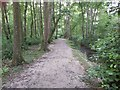 TQ5638 : Woodland Path next to a Stream by John P Reeves