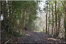 TQ5541 : Shadwell Wood by N Chadwick
