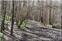 TQ5540 : Footpath, Shadwell Wood by N Chadwick