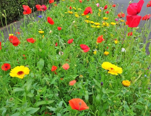 Wildflower verge