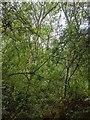 TF0820 : The edge of Bourne Wood by Bob Harvey