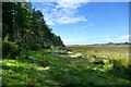 SH3965 : Path along Newborough forest edge by Andy Waddington