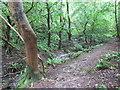 ST4555 : Footpath through woods near Cheddar by Malc McDonald