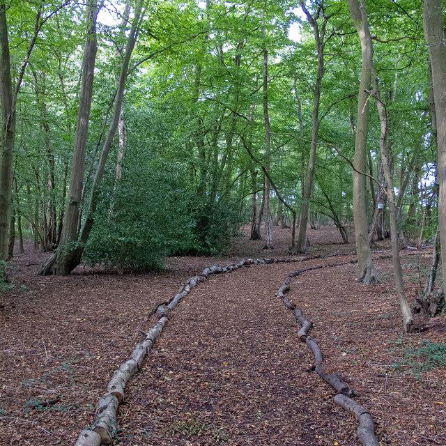 Footpath in Brickhouse Wood, Pilgrims Hatch