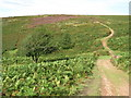 ST1239 : Quantock Hills near Bicknoller by Malc McDonald