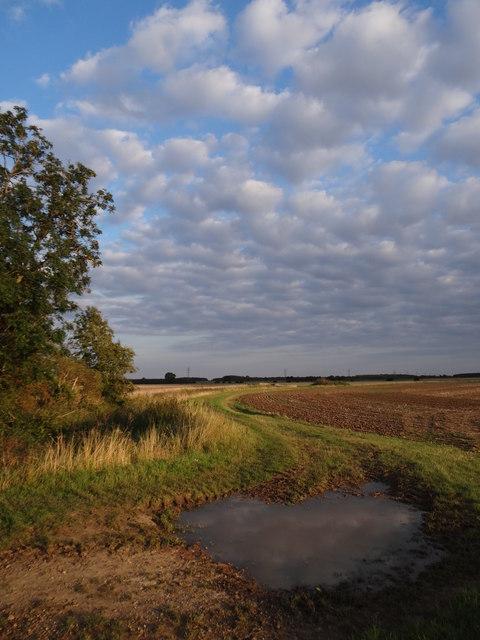 Still open fields