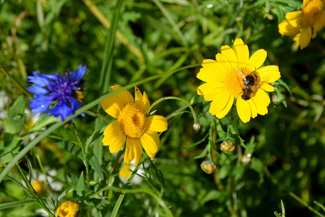 Insects and wild flowers, Mullaghmore