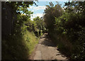 SX9473 : Eastcliff Walk by Derek Harper