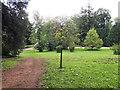 ST8489 : The Macmillan Way going through Westonbirt Arboretum by Vieve Forward