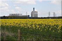 TF6016 : Oilseed rape by N Chadwick