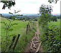 SO9281 : Monarch's Way at Wychbury Hill by Mat Fascione