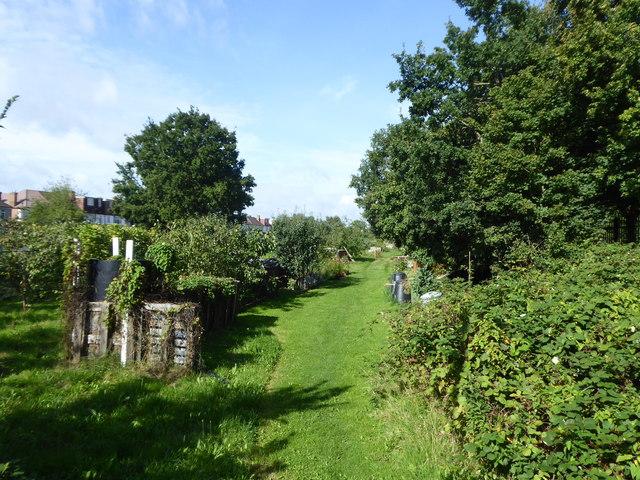 Allotment gardens behind Granville Avenue