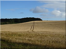 SE1986 : Tracks in crop field near Rookwith  by JThomas