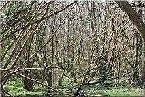 TQ5637 : Ramslye Wood by N Chadwick