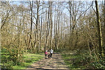 TQ5638 : Tunbridge Wells Circular Walk link path, Friezland Wood by N Chadwick