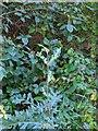 TF0820 : Fresh new growth in Autumn by Bob Harvey