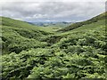 NT9228 : Ferns on the slopes of Yeavering Bell by David Robinson