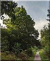 TF0820 : The seedless Oak by Bob Harvey