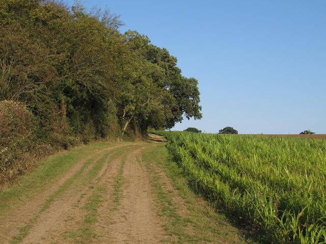Three Forests Way through arable land, Stapleford Tawney