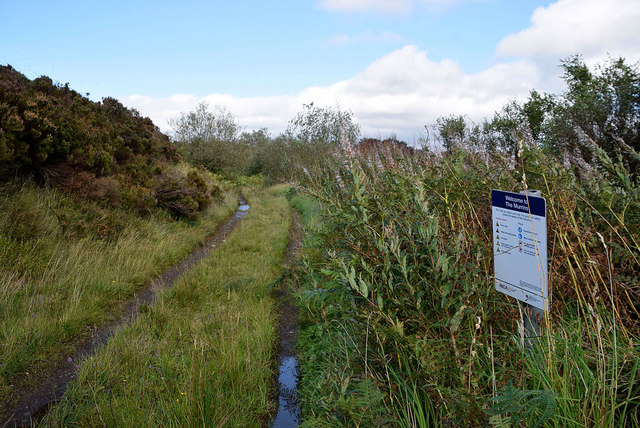 Overgrown lane, Altdrumman
