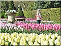 TQ0658 : Wisley - Tulips by Colin Smith