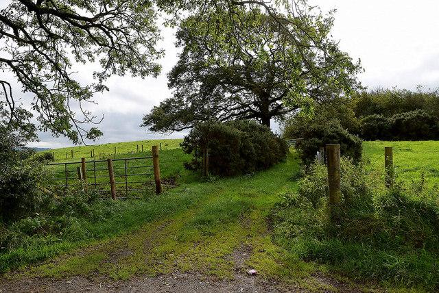 Grassy lane, Mullaslin