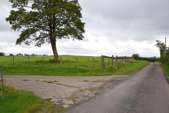 Tree along Roeglen Road
