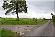 H5572 : Tree along Roeglen Road by Kenneth  Allen
