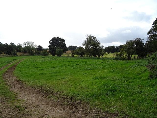 Grazing, Azerley Park