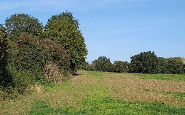 Field near White Bear House, Stanford Rivers