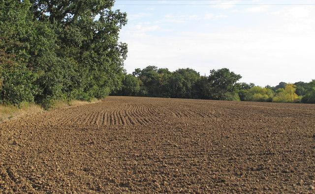 Tilled field near Shonk's Mill House, Navestock